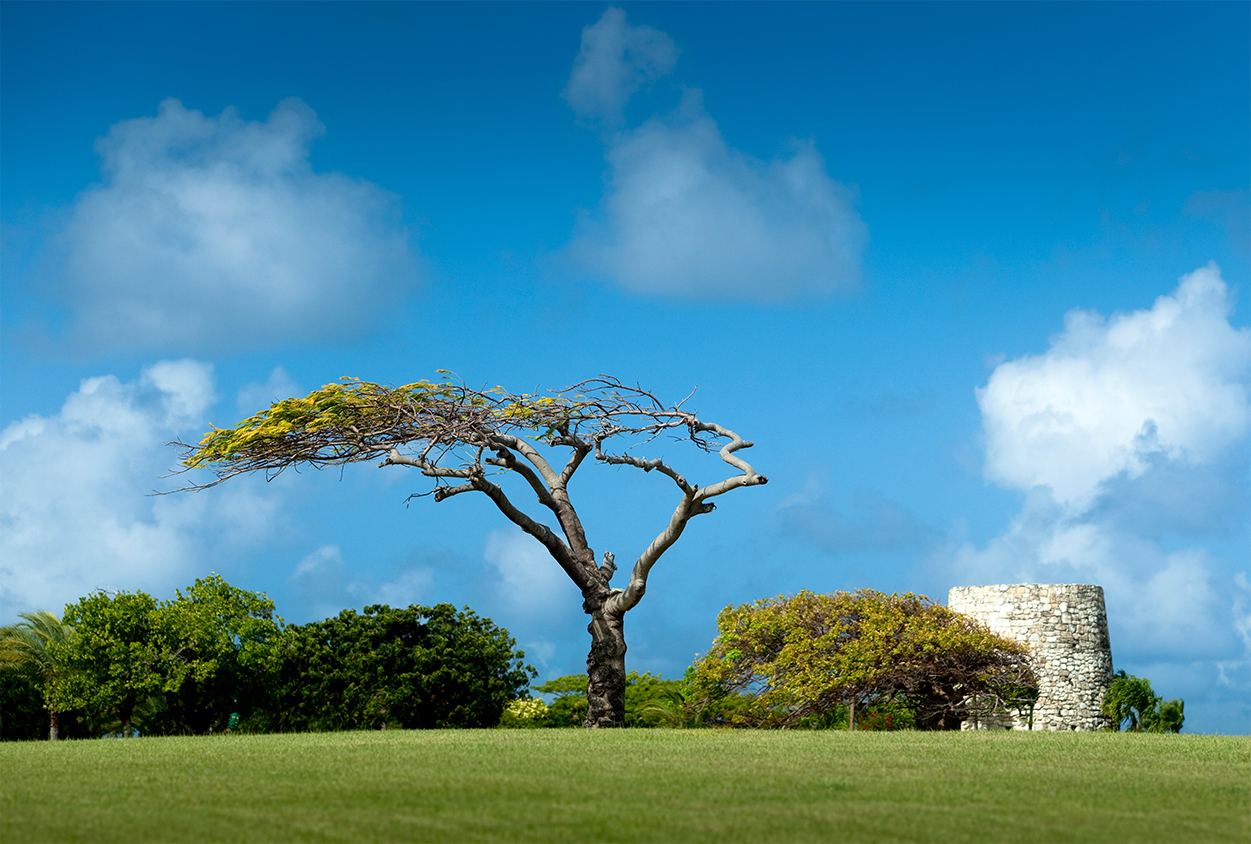 Trees and lawn of Jumby Bay Resort, Antigua